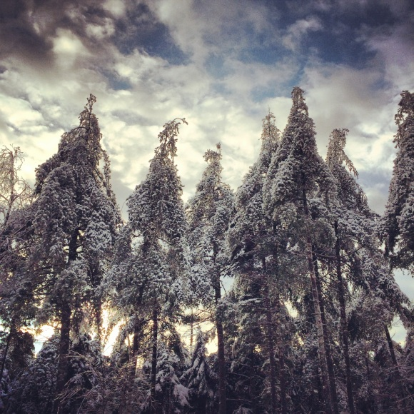Maine is even more beautiful in the winter. This is proof.